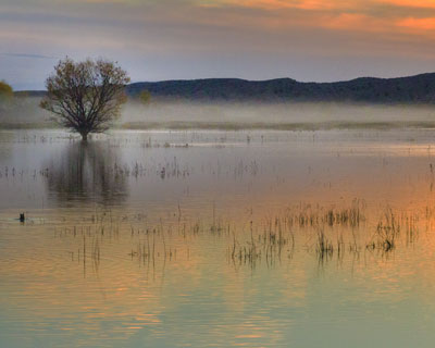 Image by sally rugala of sunset in New Mexico