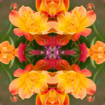 WEB_ROSE_FLOWER_8X8