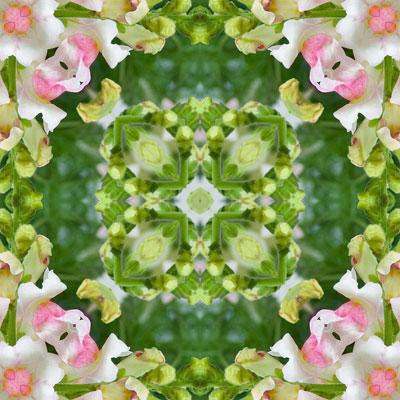 WEB_pink_fern_elf_square_8x8_fin