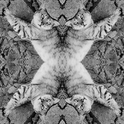 X Cat photo by Sally Rugala, symmetrical digital art